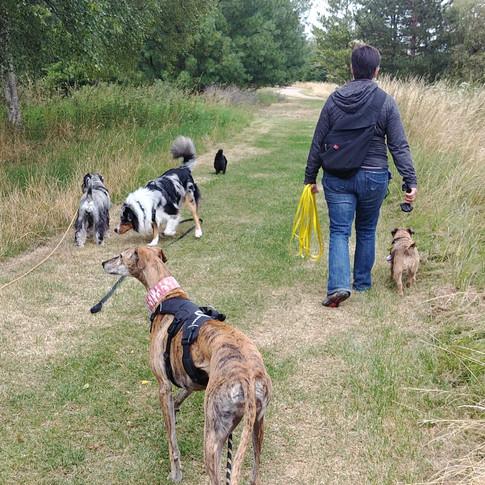 Promenades aussi pour chiots et petits chiens
