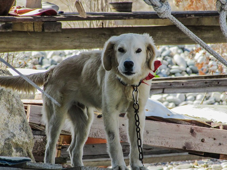 Attention ! chien attaché !