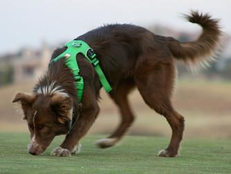 Activité de flair : la stimulation mentale ultime pour votre chien