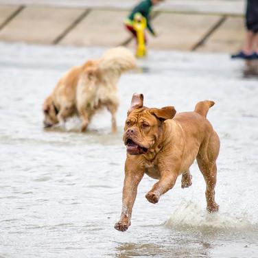 Cani-vacances