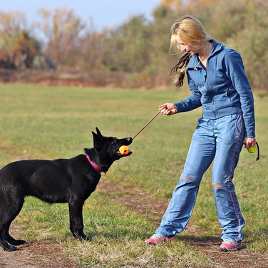Stages canins individuels