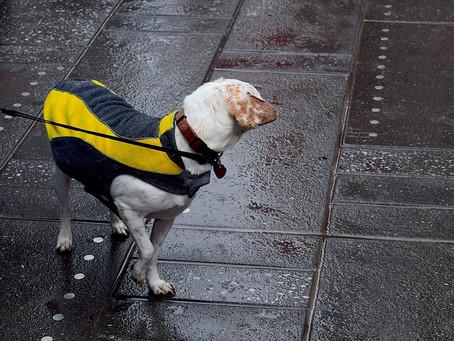 Faut-il promener son chien tous les jours ?