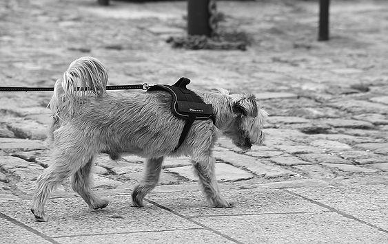 Autour du chien programme