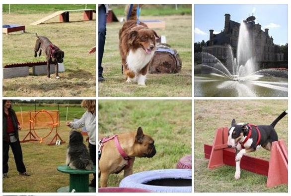 Activité avec chien agility