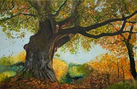 Herbstzeitbäume