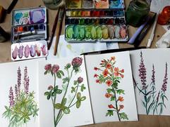Wiesenblumen-Sketching