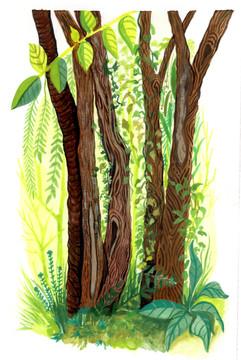 Baumgruppe 1
