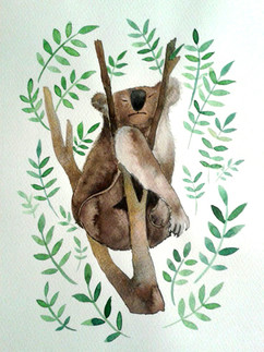 Koalaschlaf