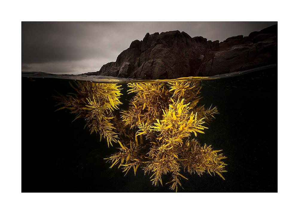 """A splash of yellow"" Photo reproduced courtesy of Matty Smith Photo"
