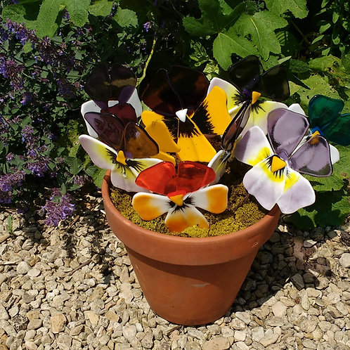 Group of 3 Pansies not in pot