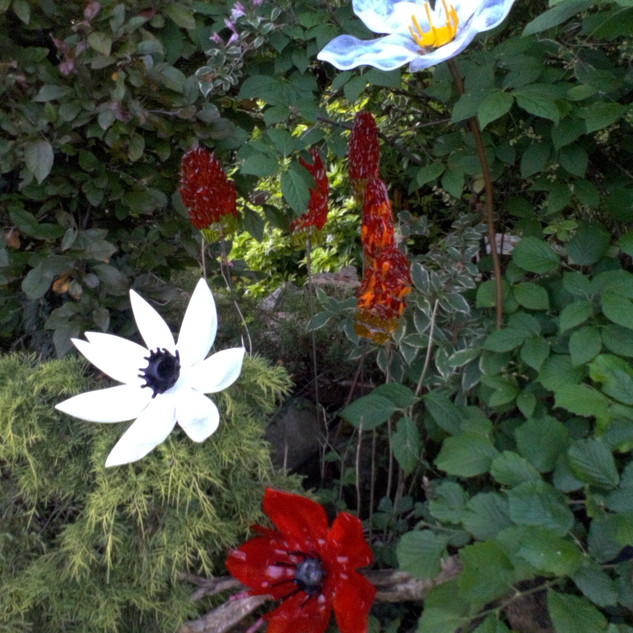 Flower collection.jpg