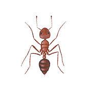 fire-ants.jpg
