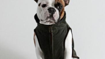 Windsor Jumper/Coat - French Bulldogs