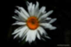 DSC_0353 (2).jpg