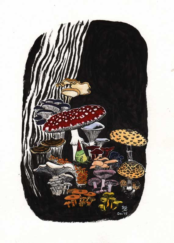 mushrooms and toadstools