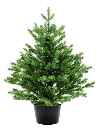 5ft to 6ft Pot Grown Living Christmas Tree - Non-Drop Nordmann Fir