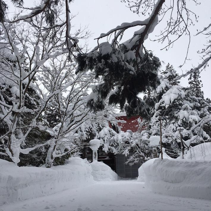 2017年 冬 (12月〜2月)