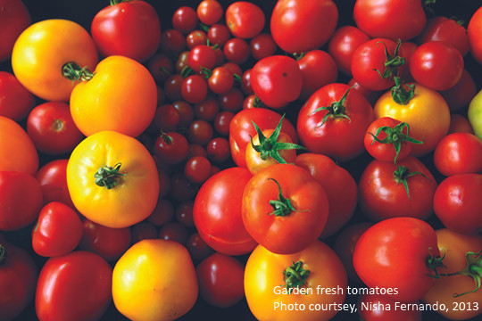 Tomatoes_nisha_blog.jpg