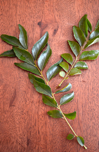On Curry leaves & conversations
