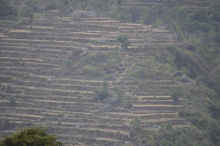 Terrace farming, near Mussourie
