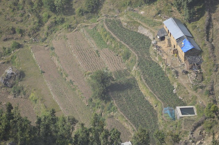 Farming in the terraces of Dhanaulti