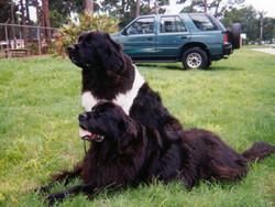 Dixie & Cindy 3