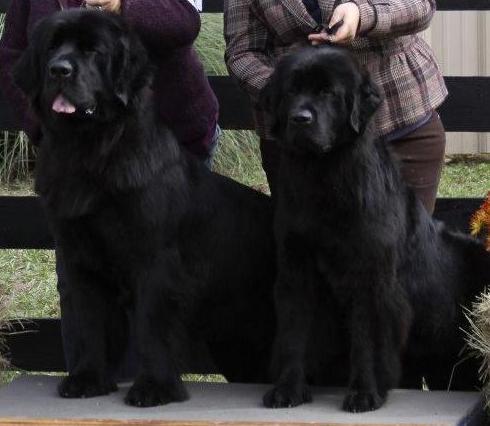 Ellie & Raven 2