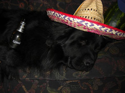 guinness_the_party_animal_10