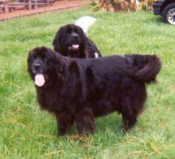 Dixie & Cindy 4