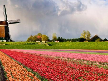 Voluntariado Europeo en Países Bajos - trabajo sostenible en una granja neerlandesa