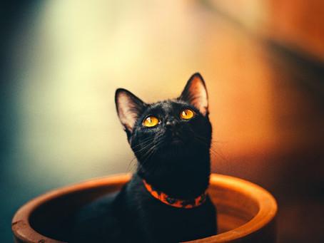 Gatos negros, ¿buena o mala suerte?