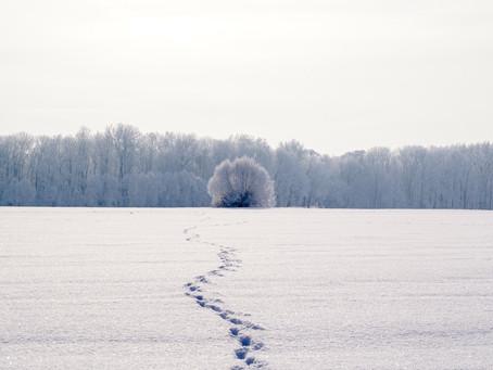 Invierno en mi...