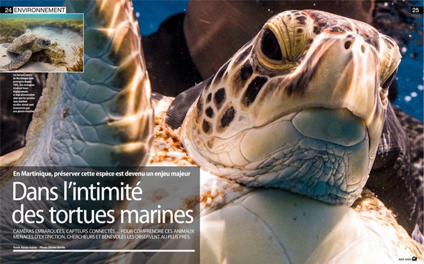 Cam'Interesse aout 2020 - Tortues de Mar