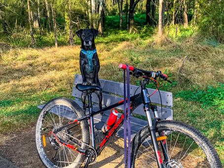 Biking with dogs either for fun or for the endurance trial
