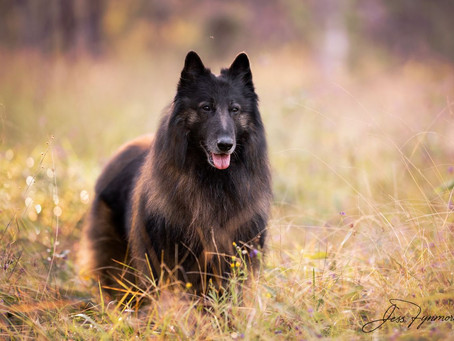 How older Stud dogs can change the world