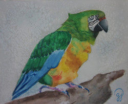 watercolor-by-charlotte-teen