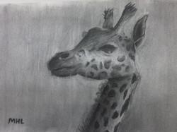 charcoal-drawing-giraffe-by-teen-art-student