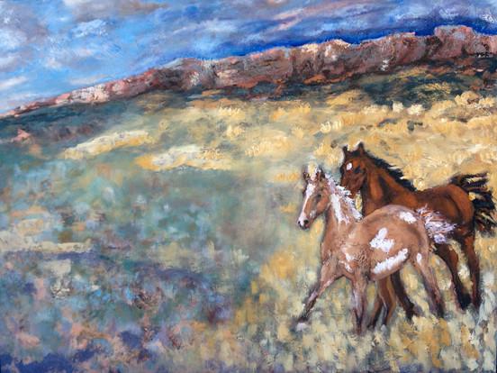 Herd Of The Wild West - part 1