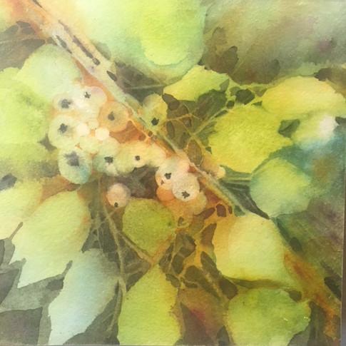 "Berry Study / Watercolour / 8"" x 8"""