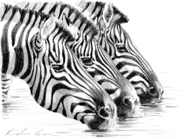 Drinking Zebras (SOLD)