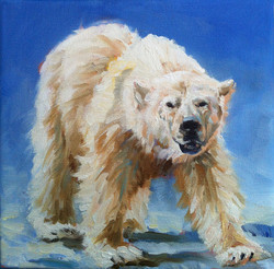 Polar Bear Study III
