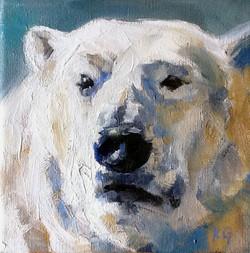 Ice Bear II