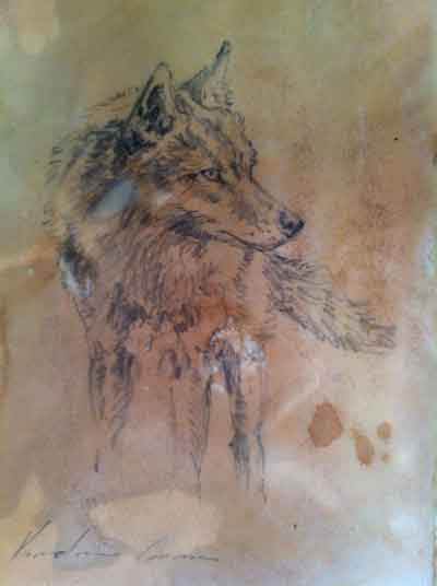 Coyote Sketch (SOLD)