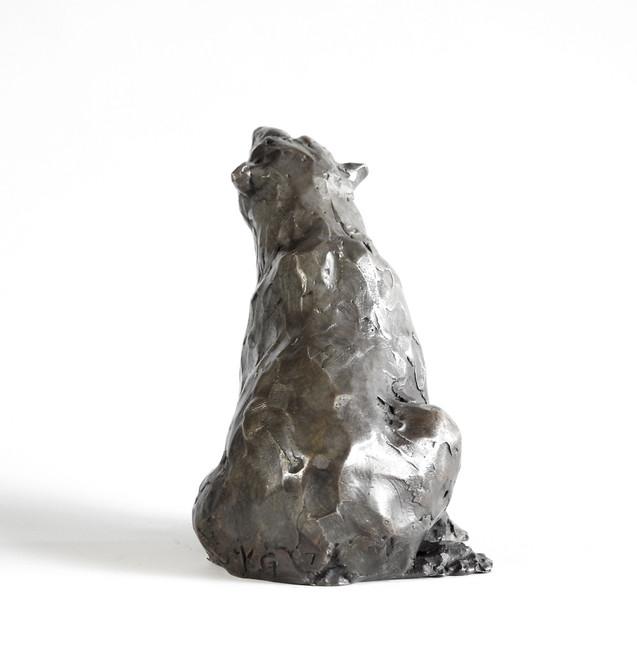 Star Gazer: Polar Bear