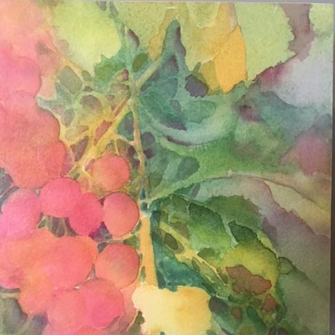 "Ripening / Watercolour / 6"" x 6"" / 2 of 2"