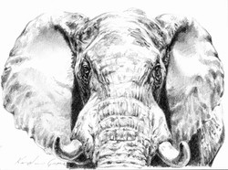 Etosha Bull I (SOLD)