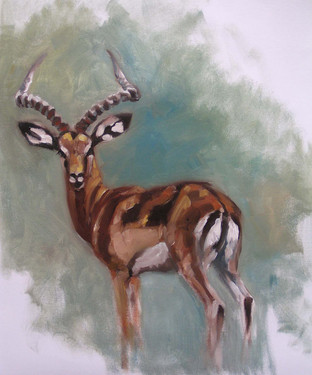 Impala Buck Study