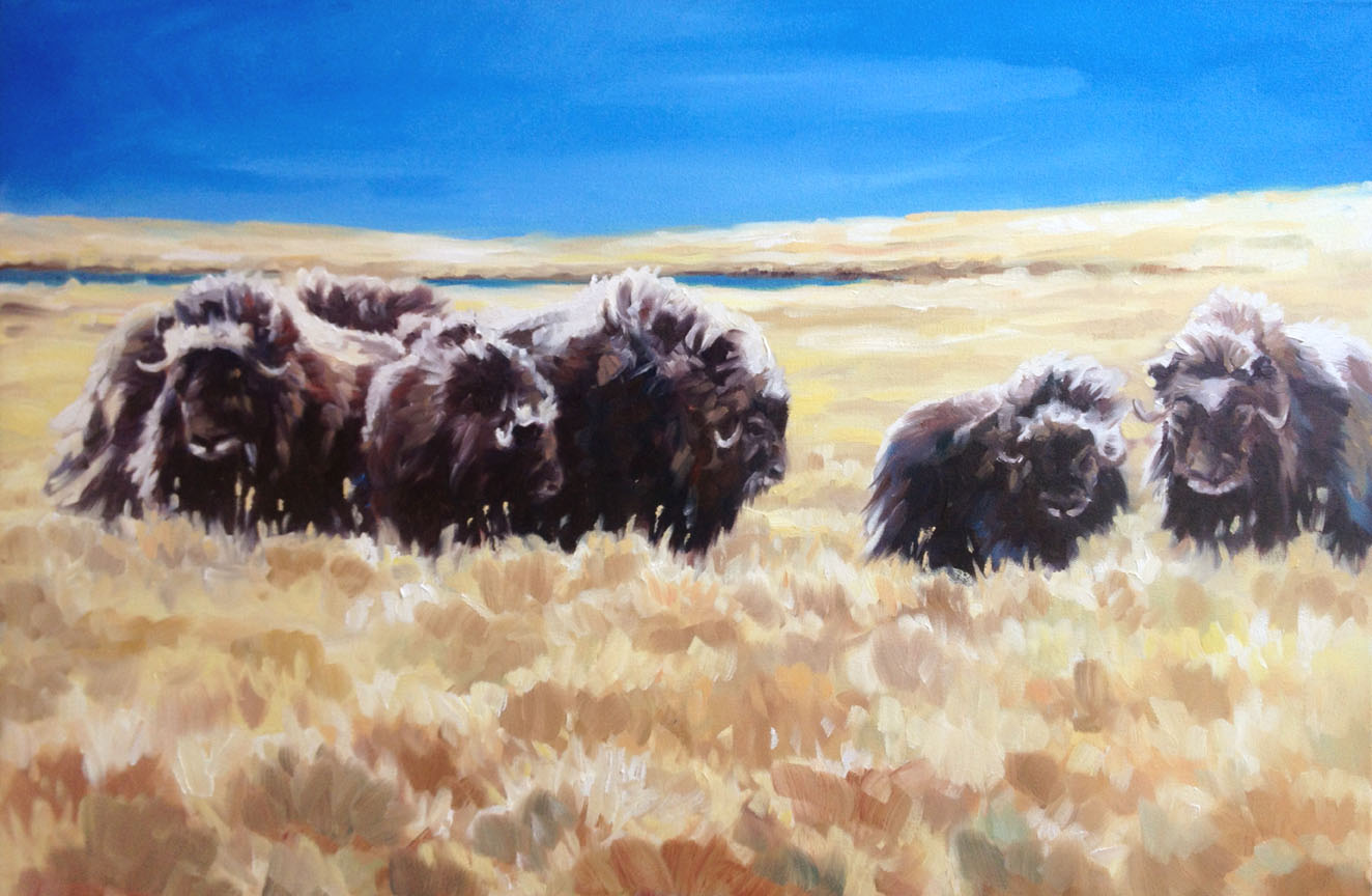 The Circle: Muskoxen
