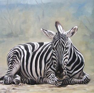 Sleeping Zebra (SOLD)