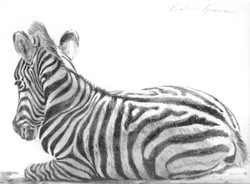 New Life, Zebra Foal (SOLD)